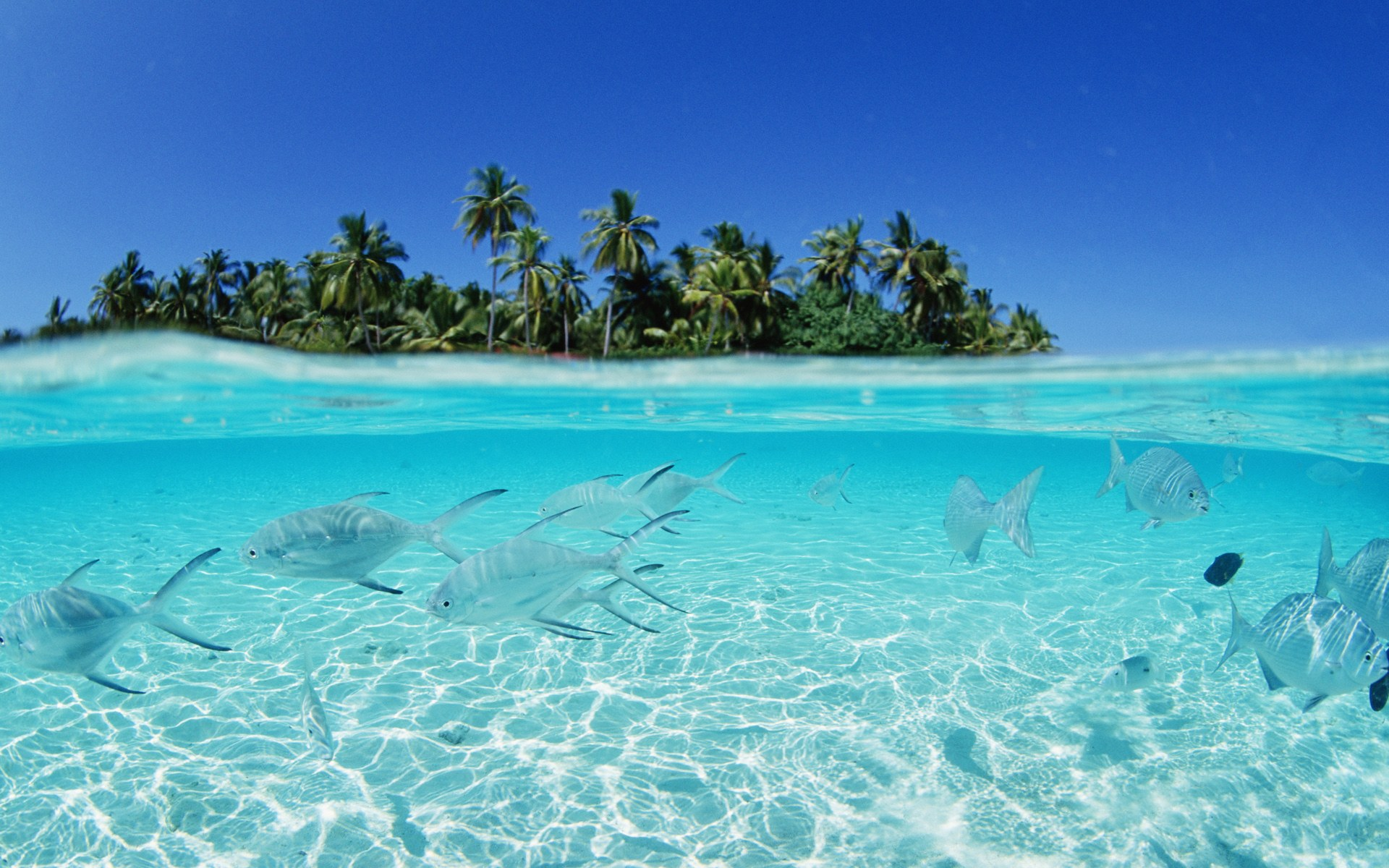 Facts you do not know for Maldives (6)