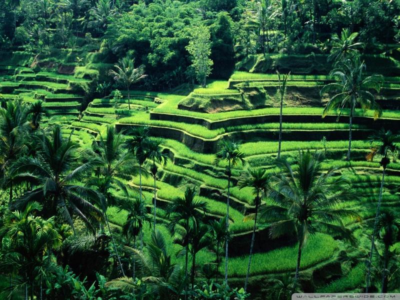bali_indonesia-wallpaper-800x600