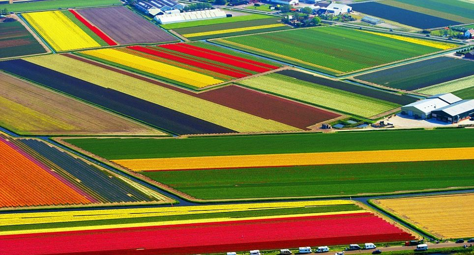 tulip-fields-of-Netherlands