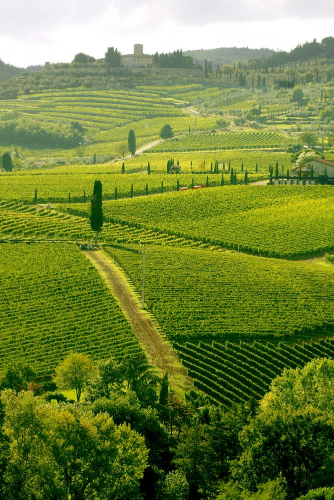 Italy_Tuscany_Tour_Vineyard_in_Chianti_famous_landscape