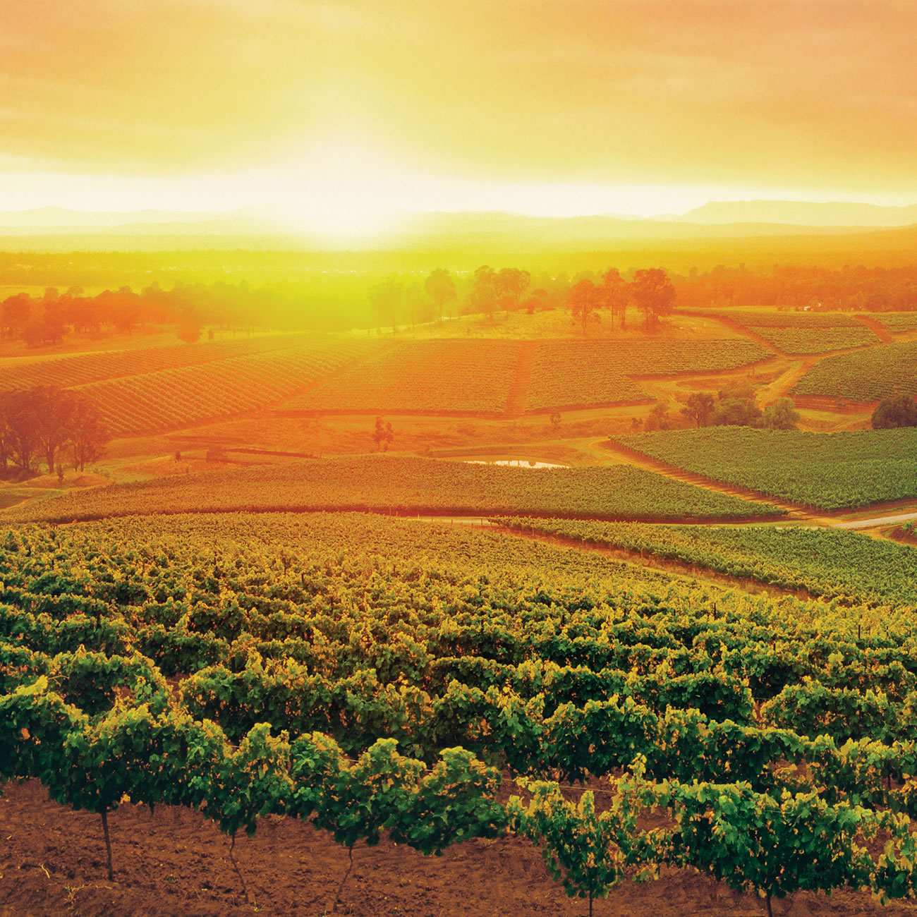 The Hunter Valley - Australia - wine lovers