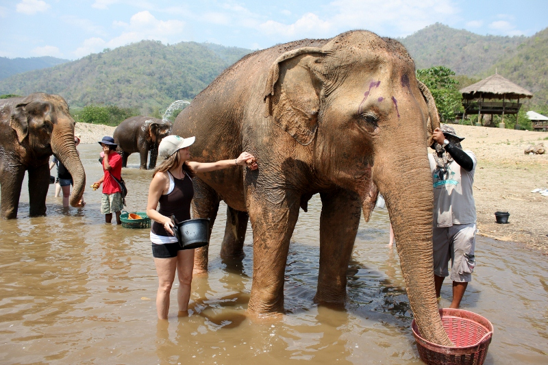 Bath elephants at a Rescue in Thailand