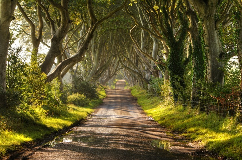 .Dark Hedges in Ireland