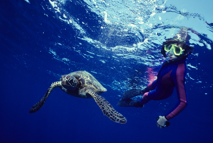 Swim with the Sea Turtles, Wes Maui Once in a lifetime experiences