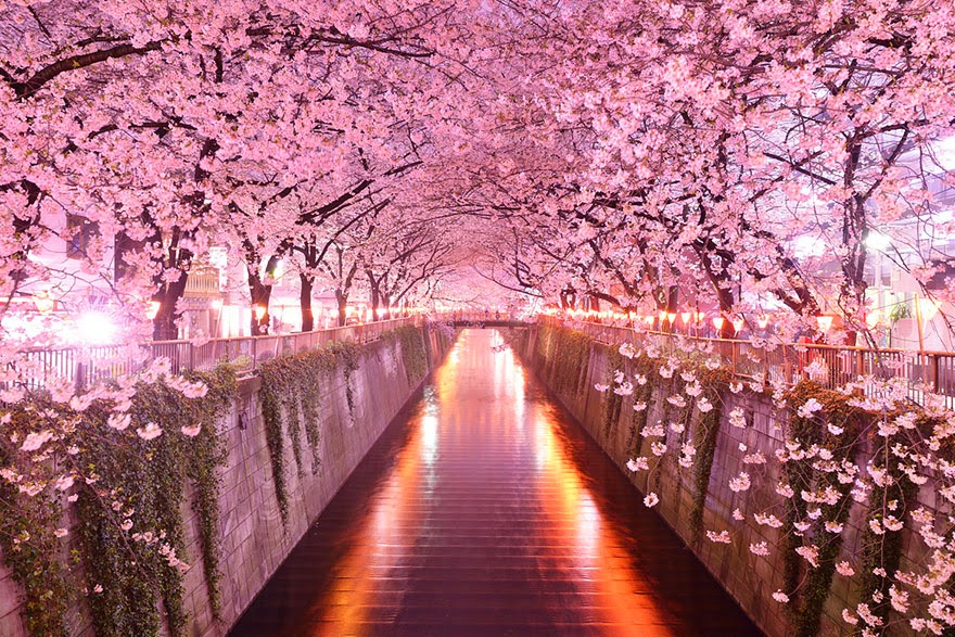 Mysterious Cherry Blossom Path